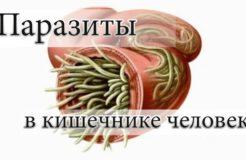 Лечение кишечника от паразитов, их виды и влияние