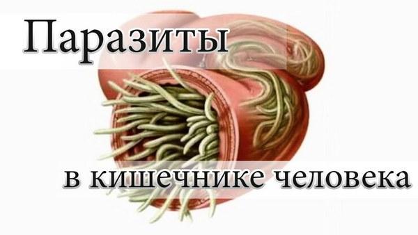 паразиты в кале человека фото