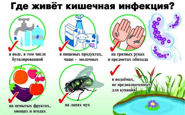 размножение кишечной инфекции