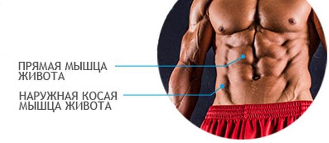 мышцы пресса у мужчин