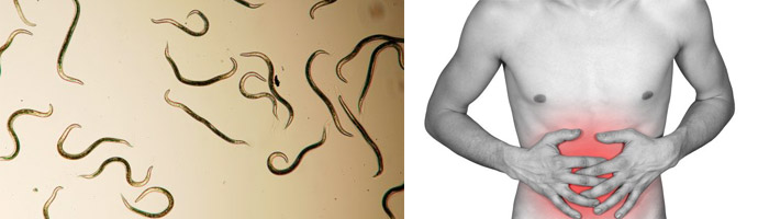 что делать при появлении паразитов в животе