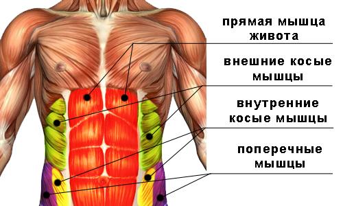 мышцы пресса живота