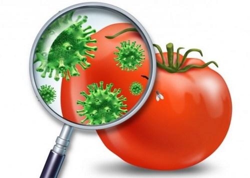 помидор с микробами