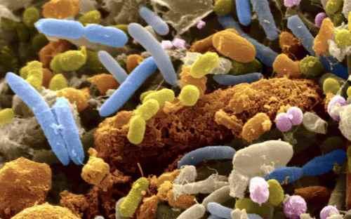 Живые бактерии