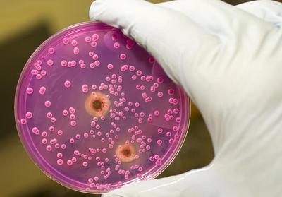 кандидоз бактерии
