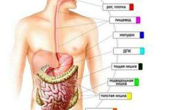 Симптомы заболевания желудочно кишечного тракта, виды патологий