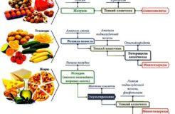 Пищеварительные ферменты желудка, их виды