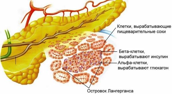 Ферменты для поджелудочной железы