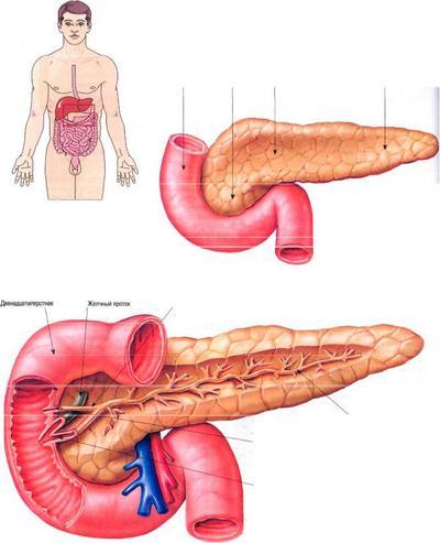 локализация поджелудочной железы