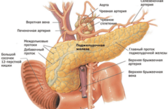 Препараты для улучшения работы поджелудочной железы