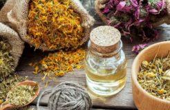 Полезные травы для очищения кишечника — рецепты