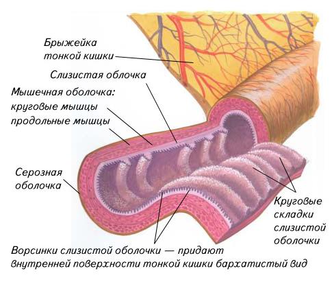 Симптомы воспаления брыжейки кишечника