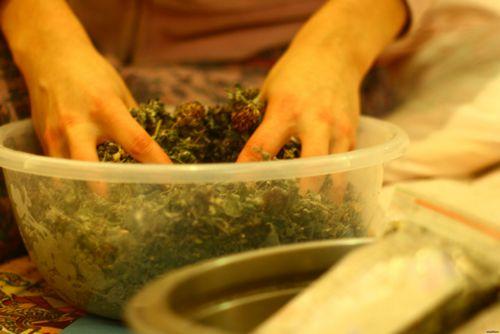 Травы для кишечника