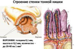 Какая среда в тонком кишечнике, возможные нарушения